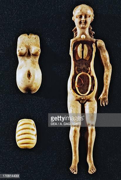 Anatomical Venus Germany Rome Museo Storico Nazionale Dell'Arte Sanitaria