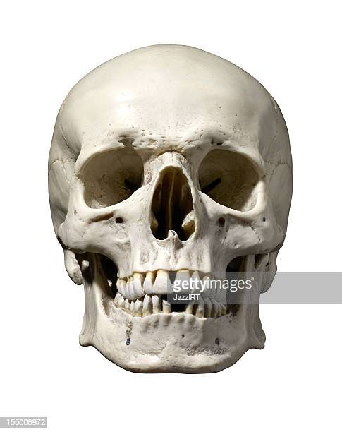 skull stock photos and pictures | getty images, Skeleton