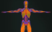 Human anatomy 3D futuristic scan technology with xray-like view of human body. Torso front. Vibrant colors. Xray-like.