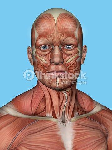Aufbau Von Gesicht Und Hals Muskeln Stock-Foto | Thinkstock
