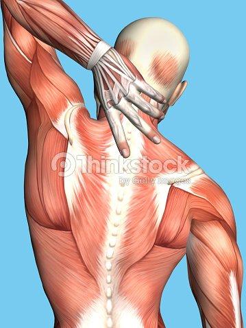 Anatomía De Hombre Con Dolor De La Parte Superior De La Espalda Foto ...