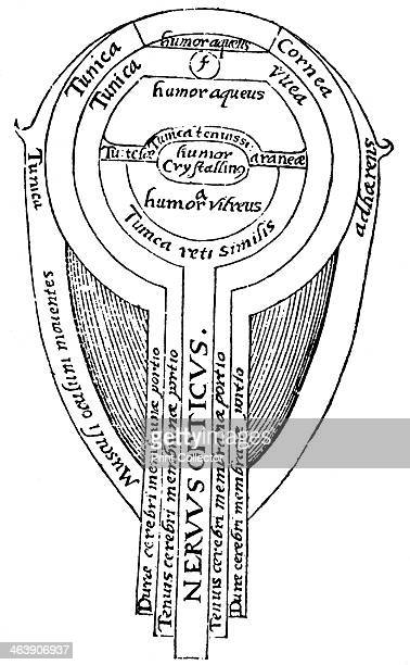 Anatomy of the eye 1572 Illustration showing the structure of the eye from an edition of Optica thesaurus a work on optics by the Arab mathematician...