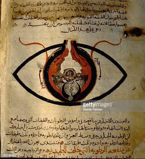 Anatomy of the eye from the islamic medical manuscript of al Mutadibi Egypt Islamic 1170 1199 AD