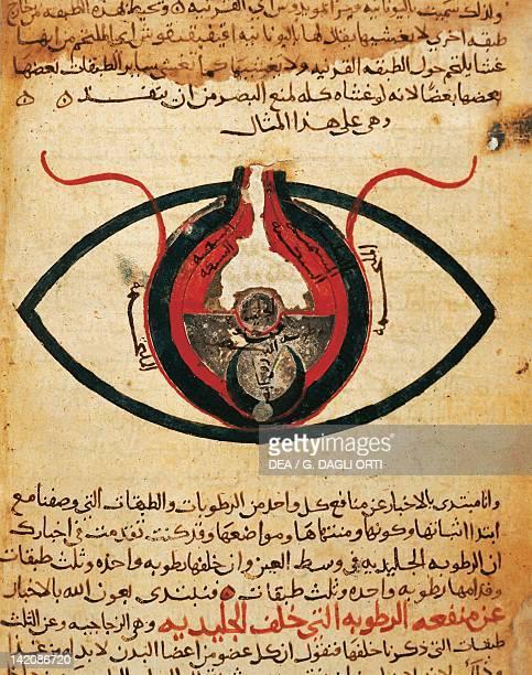 Anatomy of the eye miniature from the Treaty on the Eye by AlMutadibid Arabic manuscript Egypt 13th Century