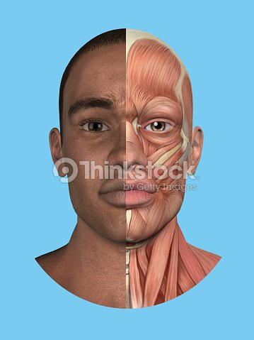 Anatomy Split Front View Of Face And Major Facial Muscles Stock ...