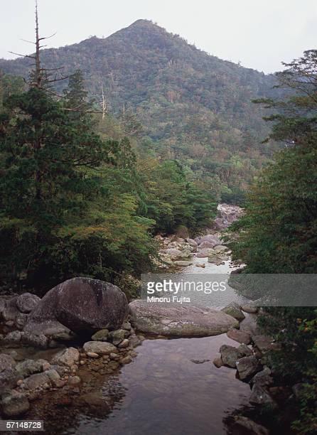Anbo River, Yakushima, Japan