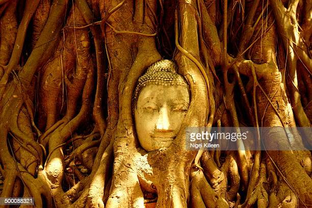 Ancient Buddha head intertwined in tree roots