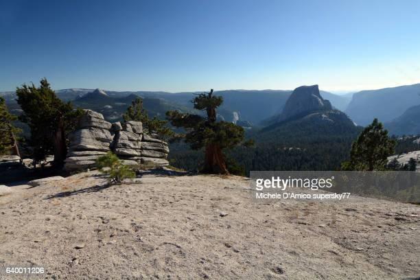 Ancient Juniper trees on the Yosemite granite and the Half Dome