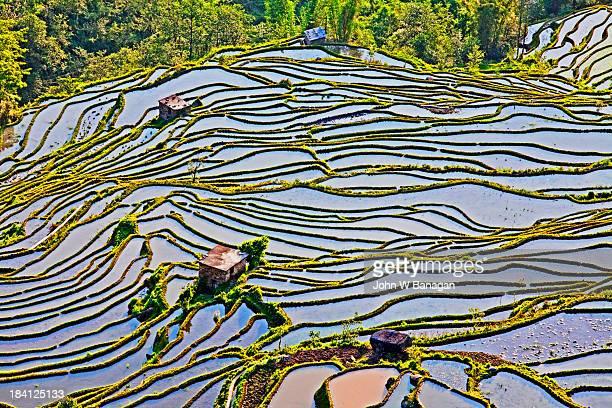 Ancient rice terraces