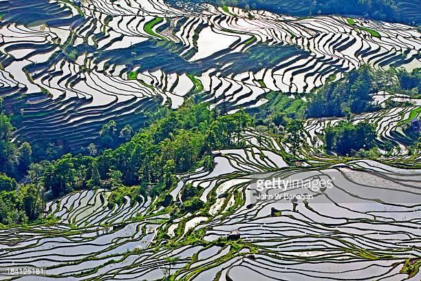 Ancient rice terraces.