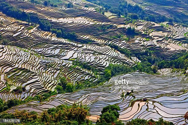 Ancient rice terraces, Yuanyang, Yunnan ,China