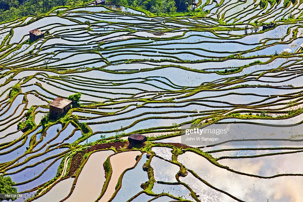 The ancient rice terraces of Yuanyang are now a major tourist destination for Chinese people with some overseas tourists. Yunnan, China.