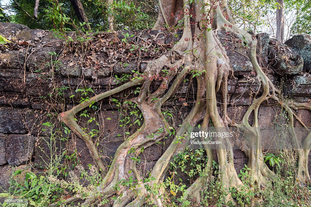Ancient Temple of Bang Melea, Cambodia : Stock Photo