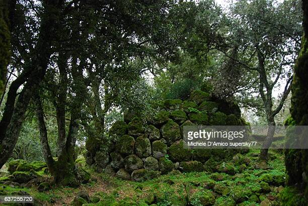 Ancient walls in the ancient wood