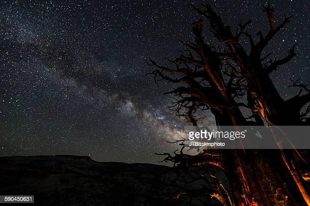 Ancient wonders - Yosemite National Park, CA