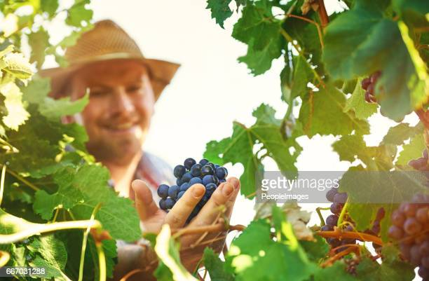And so I continue to produce fantastic grapes