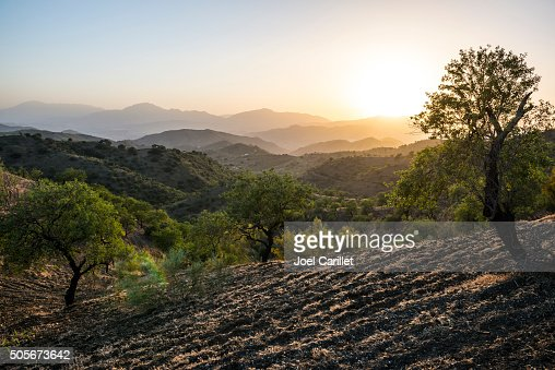 Andalusian landscape at sunset with olive trees in Spain