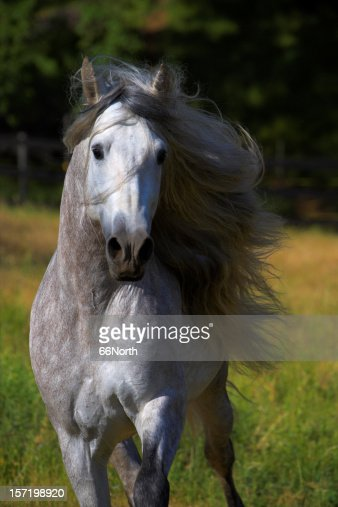long manes stock photos - photo #20