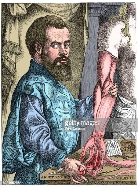 Andreas Vesalius 16th century Flemish anatomist Vesalius' great work on anatomy De Humani Corporis Fabrica was a landmark with accurate depictions of...
