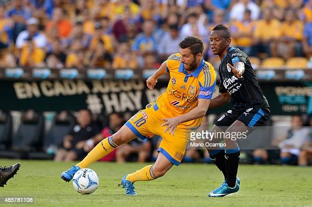 AndrePierre Gignac of Tigres deffends the ball from Yerson Candelo of Queretaro during a 7th round match between Tigres UANL and Queretaro as part of...