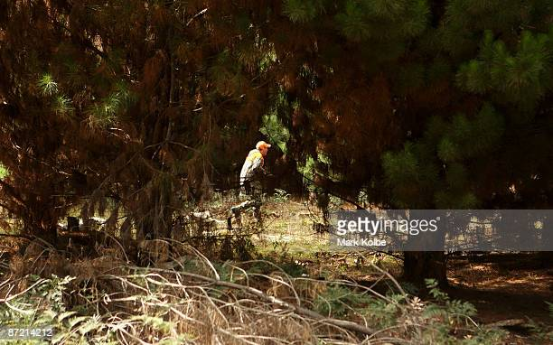 Andrew Moriarty stalks through pines after sighting wild goats in the Vulcan State Forest on May 10 2009 in Black Springs Australia Voluntary...