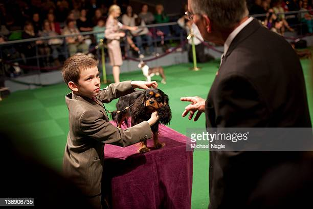 Andrew Mueller competes with his Cavalier King Charles Spaniel 'Stella' in the Junior Showmanship Preliminaries at Westminster Kennel Club Dog Show...