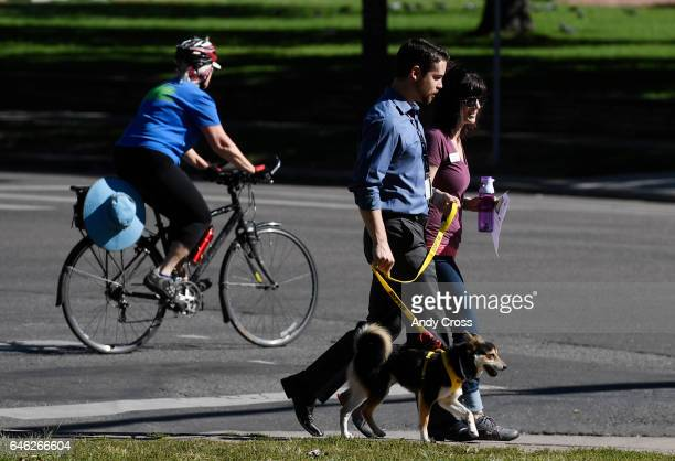 Andrew Pugliese center walks Charles a Denver animal Shelter dog a Shiba Inu along Broadway at 14th Ave with Erica Carder who is with Denver Animal...