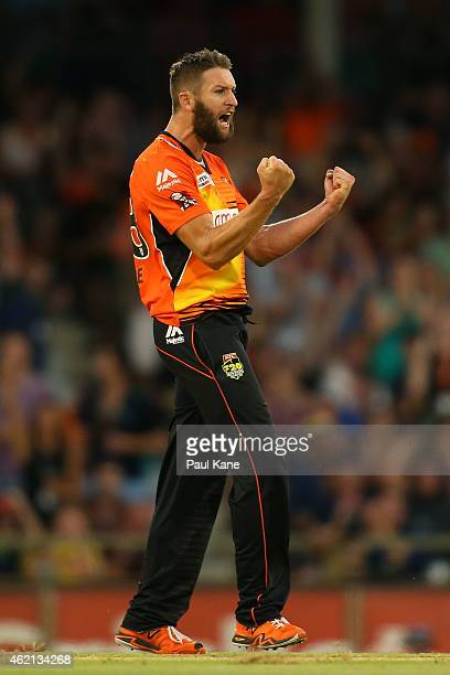 Andrew Tye of the Scorchers celebrates after dismissing John Hastings of the Stars during the Big Bash League Semi Final match between the Perth...