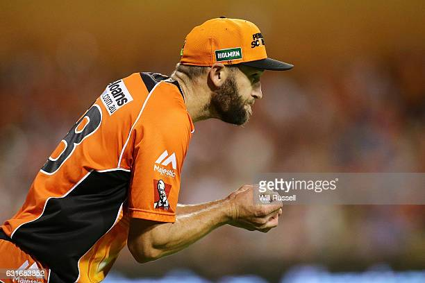 Andrew Tye of the Scorchers celebrates after taking a catch to dismiss Luke Wright of the Starsoff the bowling of Jhye Richardson of the Scorchers...