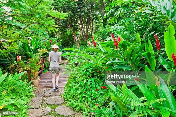 Andromeda Botanic Gardens, Barbados