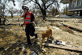 Andy a FEMA trained dog works with his trainer from the Lincoln Nebraska Fire Department to find surivors on September 2 2005 in Biloxi Mississippi...