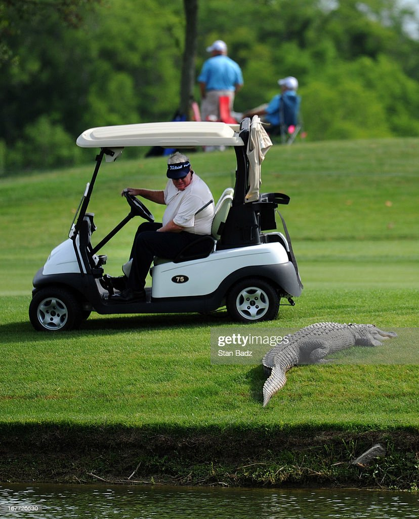 <a gi-track='captionPersonalityLinkClicked' href=/galleries/search?phrase=Andy+Bean+-+Golfer&family=editorial&specificpeople=2305557 ng-click='$event.stopPropagation()'>Andy Bean</a> takes a closer look at an alligator on the 11th fairway during the final round of the Legends Division at the Liberty Mutual Insurance Legends of Golf at The Westin Savannah Harbor Golf Resort & Spa on April 28, 2013 in Savannah, Georgia.