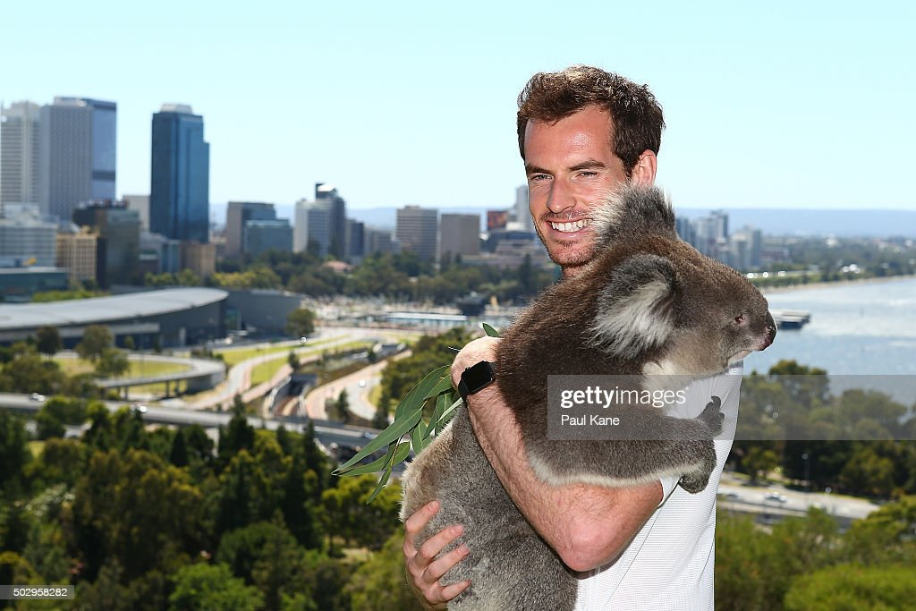 <a gi-track='captionPersonalityLinkClicked' href=/galleries/search?phrase=Andy+Murray+-+Jogador+de+t%C3%A9nis&family=editorial&specificpeople=200668 ng-click='$event.stopPropagation()'>Andy Murray</a> of Great Britain poses with Sunshine the Koala at Kings Park on December 31, 2015 in Perth, Australia.