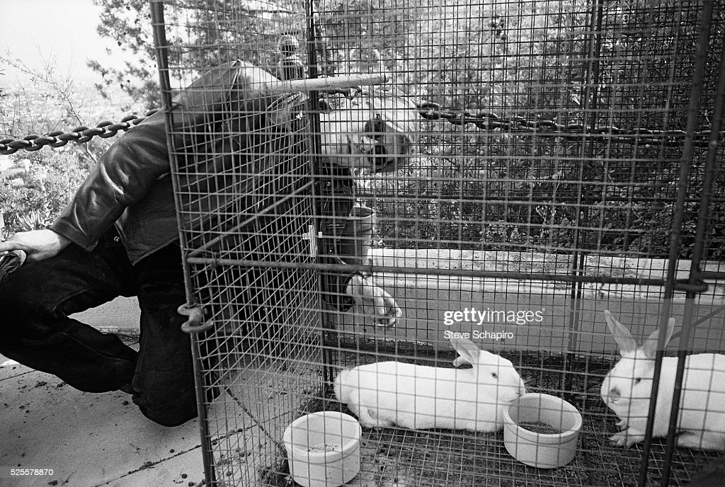 Andy Warhol crouching behind a rabbit cage at Philip Law's home in the Hollywood hills.