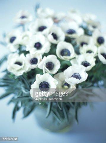 Anemones, close-up