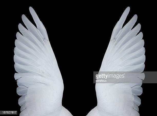 Ange des ailes de poulet, XXXL