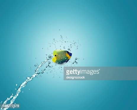 Angelfish jumping out of water : Stock Photo