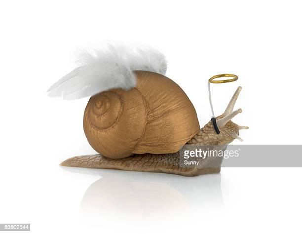 Angelsnail