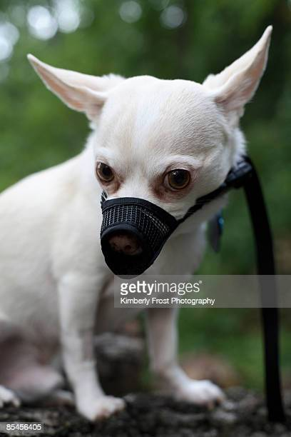 Angry dog wearing muzzle