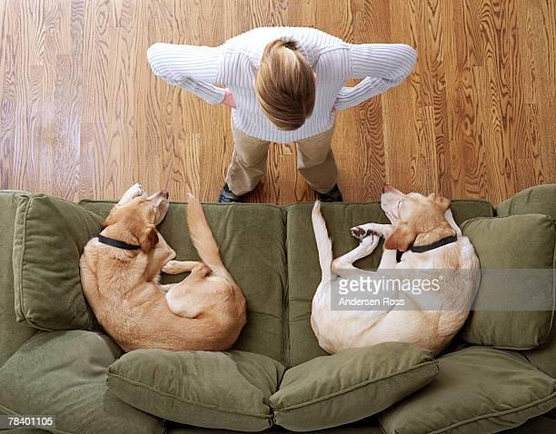 Angry woman with sleeping dogs on sofa