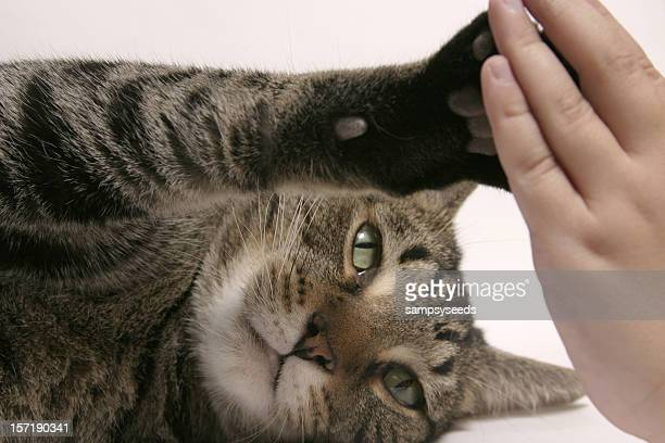Animal and Human Interaction