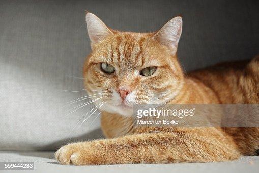 Animal Eye Contact : Stock Photo