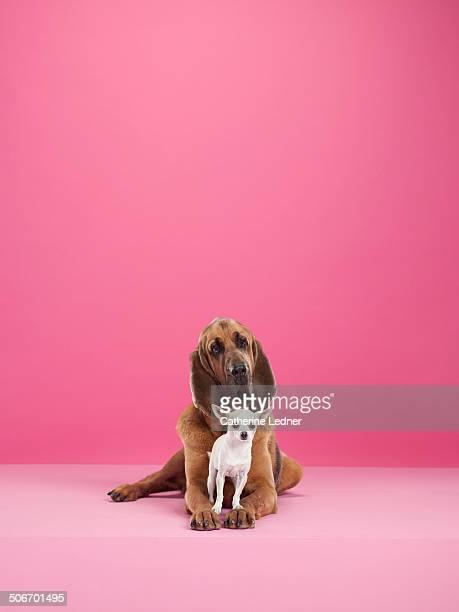 Animal Friendship