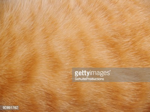 Animal Fur Background : Stock Photo