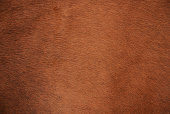 Brown natural cow fur texture