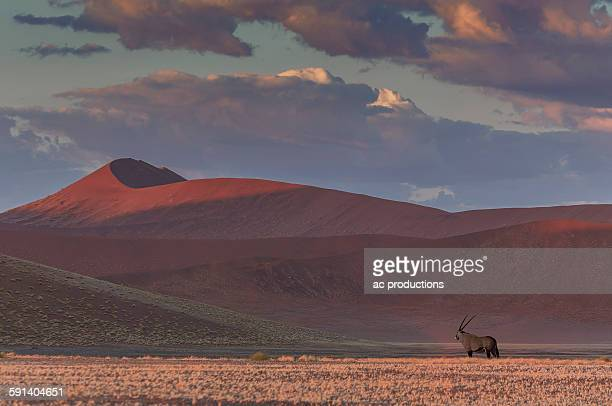 Animal grazing in remote desert landscape