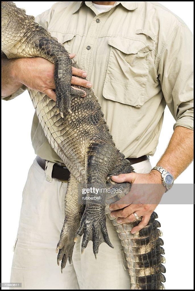 Animal handler with alligator