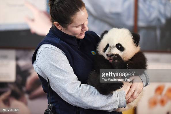Animal keeper Stacey Tabellario holds Bei Bei the giant panda cub as he is displayed to the media at the Smithsonian National Zoological Park on...