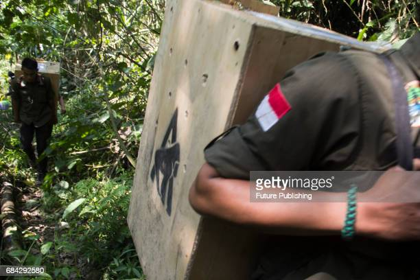 Animal keepers carry Javan Gibbon 'Owa Jawa' for the release at Tilu Mountain on May 17 2017 in West Java Indonesia Owa Jawa are endemic animals of...