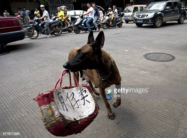 Animal loving activists use a dog carrying a basket with a message in Chinese 'Child for sale' along a street in Yulin in southern China's Guangxi...